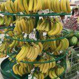 Banane Esselunga: prezzo volantino e confronto prodotti